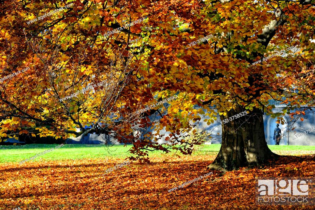 Stock Photo: Big Common Beech tree in autumn colors, Ariana park, Geneva, Switzerland, Europe.