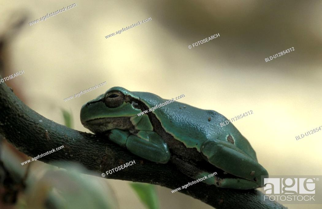 Stock Photo: bough, branches, branch, animals.