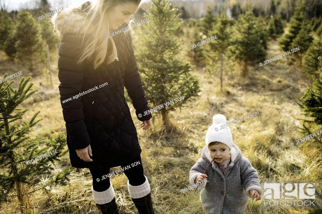 Stock Photo: Mother and baby girl in Christmas tree farm, Cobourg, Ontario, Canada.