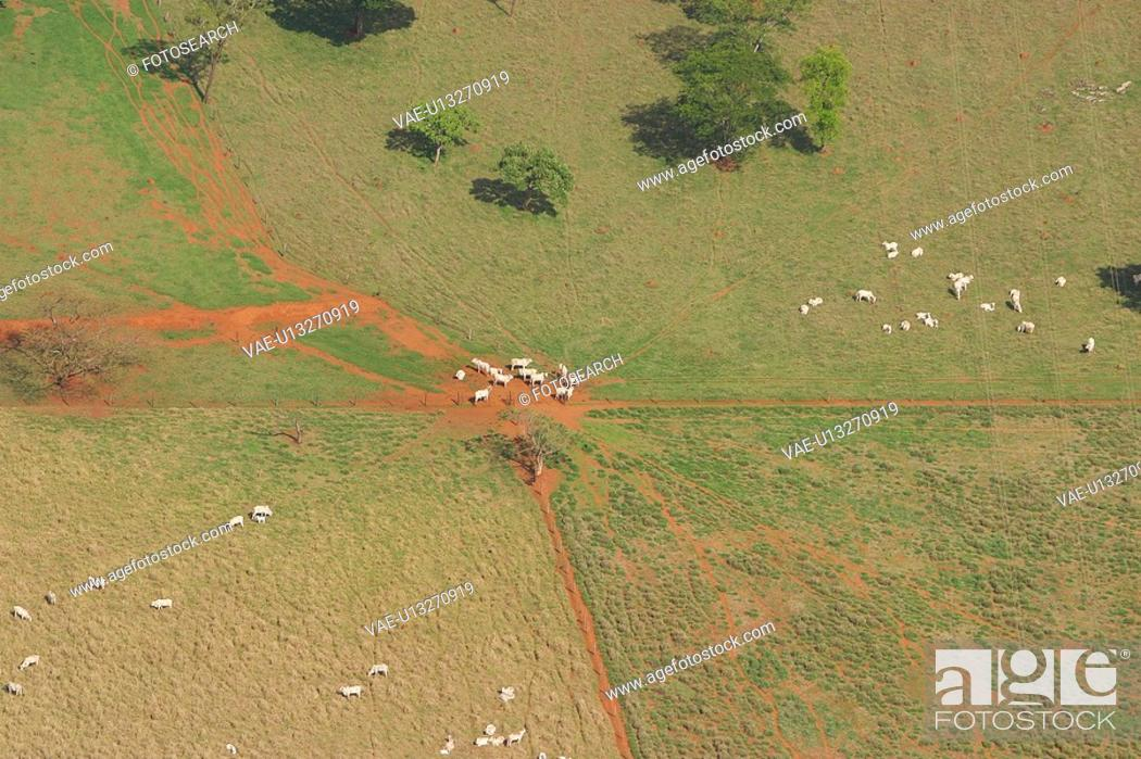 Stock Photo: agricultural land, agriculture, aerial view.