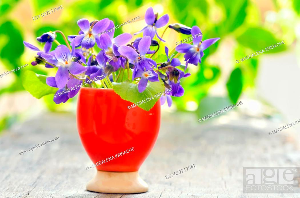 Stock Photo: violets flowers (Viola odorata) on wood background.