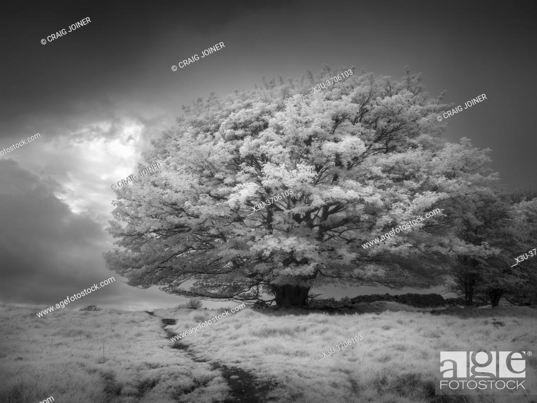 Stock Photo: Infrared landscape at Ubley Warren in the Mendip Hills, Charterhouse, Somerset, England.