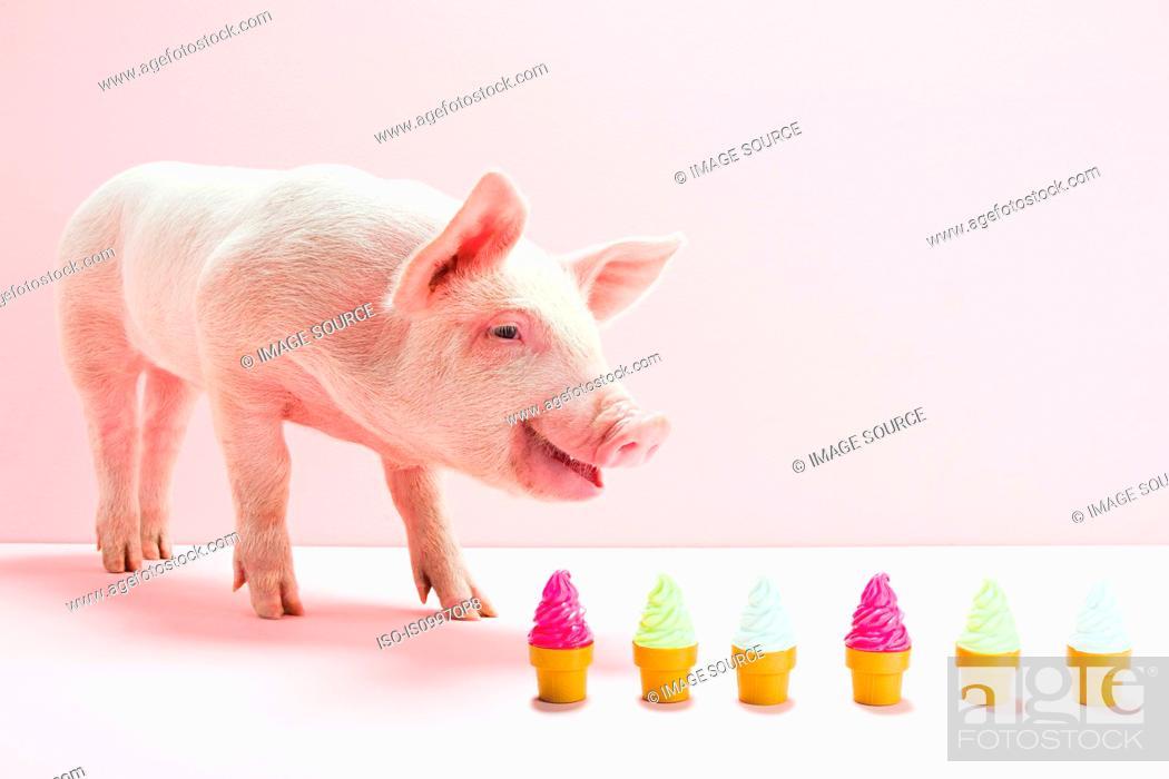 Stock Photo: Piglet next to row of toy ice cream cones, studio shot.
