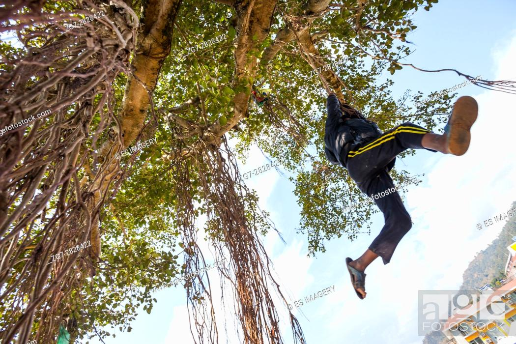 Stock Photo: Boys swing from vines hanging from a tree near the edge of Phewa (Fewa) Lake in Pokhara, Nepal.