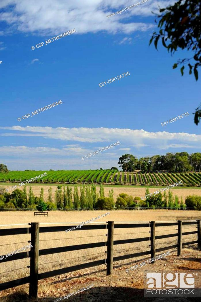 Imagen: the vineyard on the hill.
