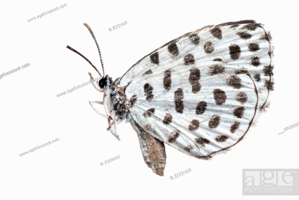 Stock Photo: butterfly side view.