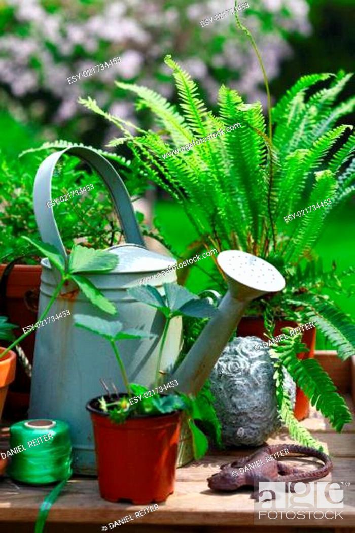 Stock Photo: Gardening still life.