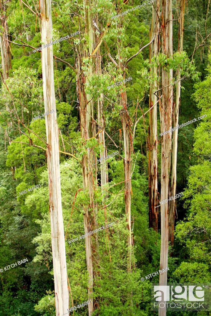 Stock Photo: Australian forest.