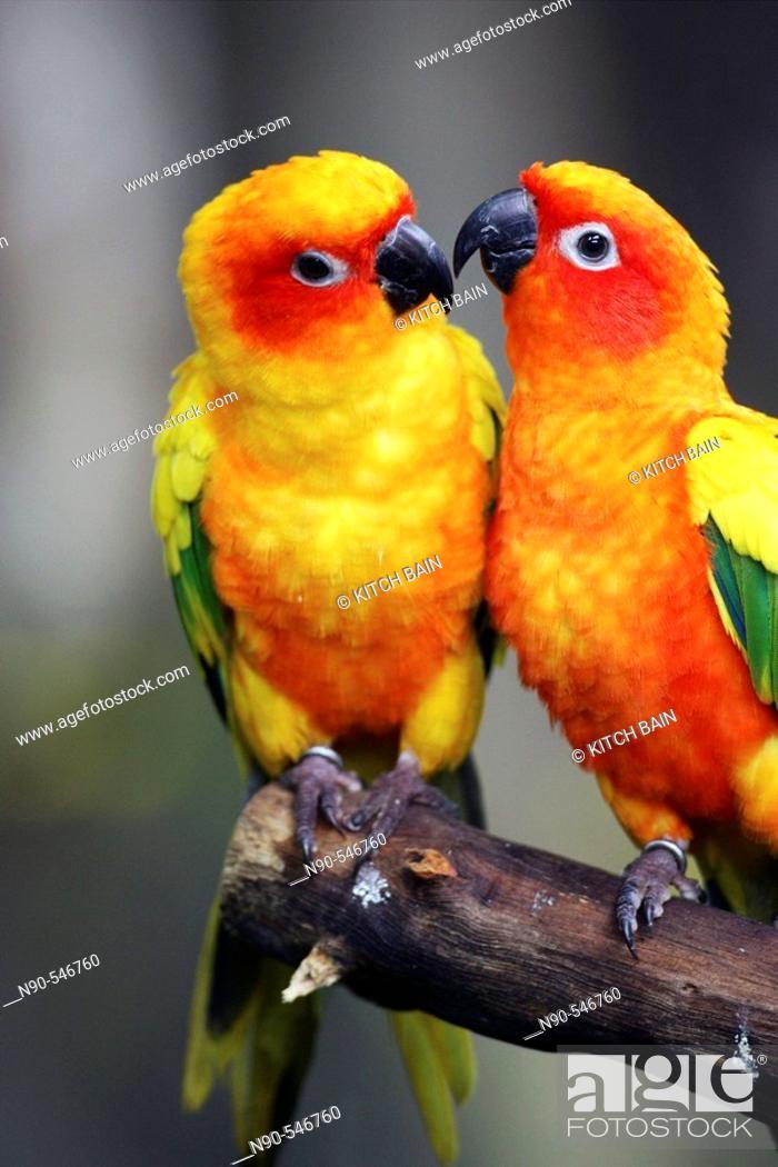 Stock Photo: Parrot.