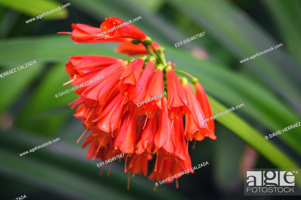 Stock Photo: Beautiful red color tropical flower on green natural background.