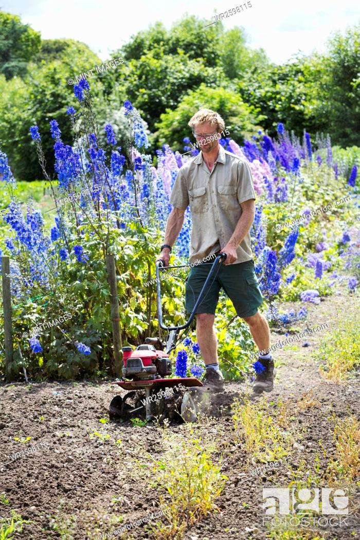 Stock Photo: A man using a rotivator on soil in flowers beds in an organic garden.