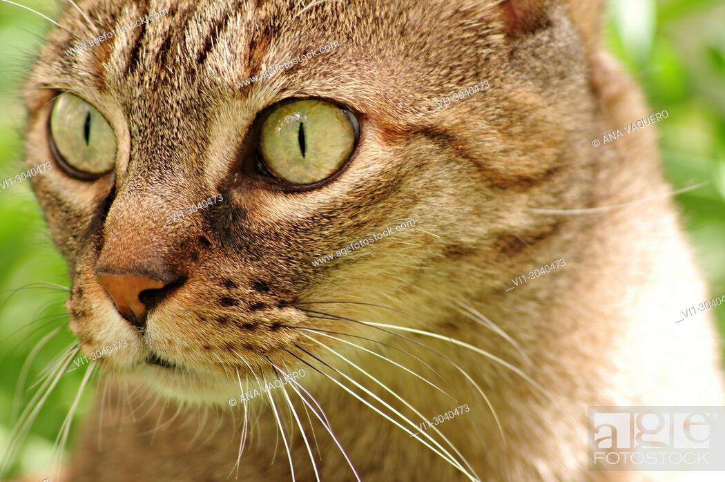 Stock Photo: The feline look, Miajadas, Cáceres, Estremadura.