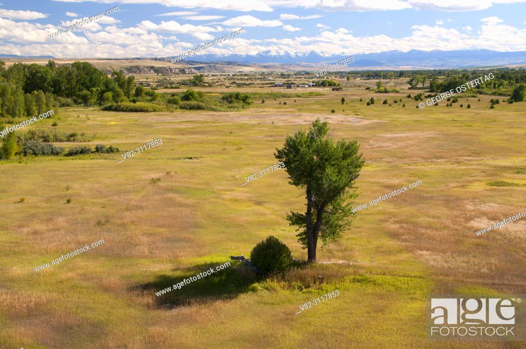 Stock Photo: Cottonwood from Fort Rock Trail, Missouri Headwaters State Park, Montana.