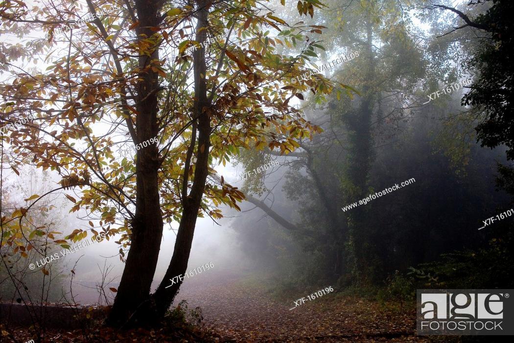 Stock Photo: way to the top of Santa Margarida Volcano, Garrotxa Natural Park, Girona province  Catalonia  Spain.