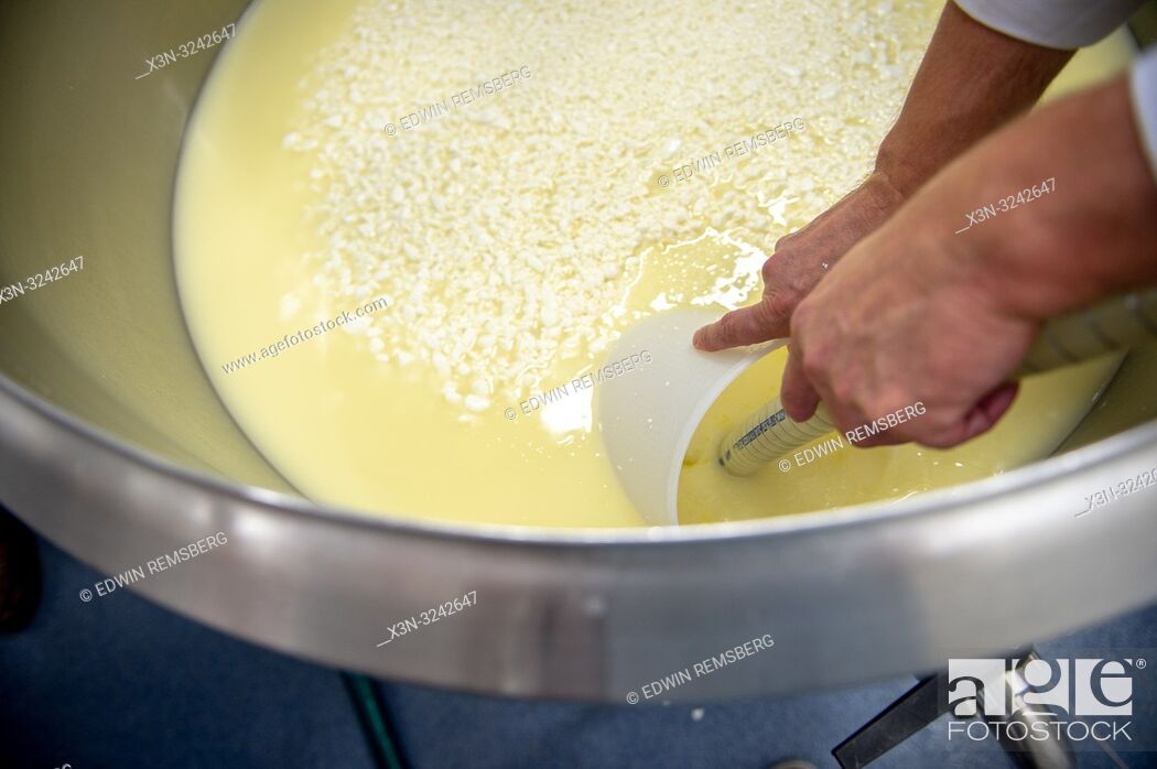 Imagen: Man drains out excess liquid from cheese curd for soft cheese making process, Radom, Masovian Voivodeship, Poland.