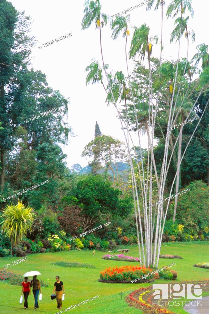 Stock Photo: Peradeniya Botanical Gardens, Kandy, Sri Lanka.