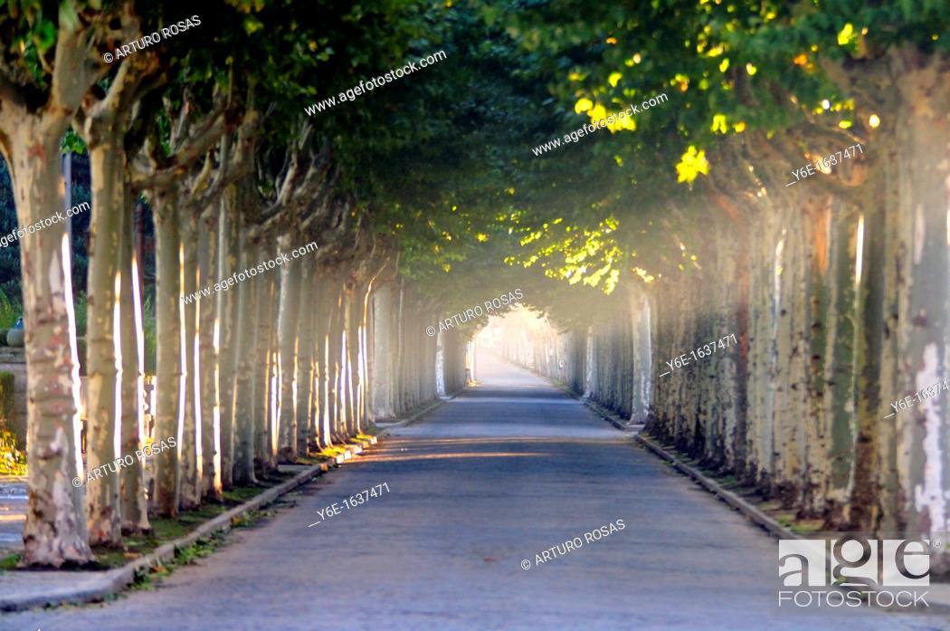 Stock Photo: Plane trees street  El Espinar, Segovia  Spain.