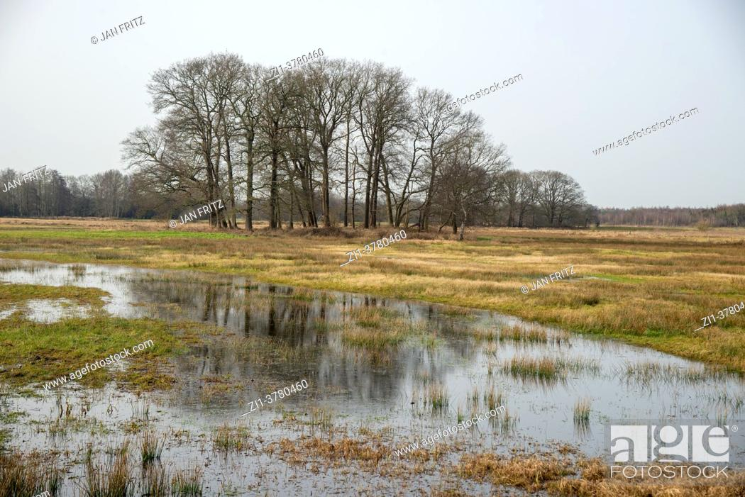 Photo de stock: country side at Reest valley in spring in Overijssel, Holland.