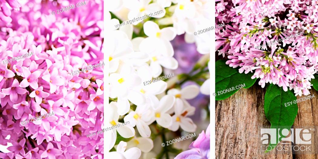 Stock Photo: The lilac close up as a background.