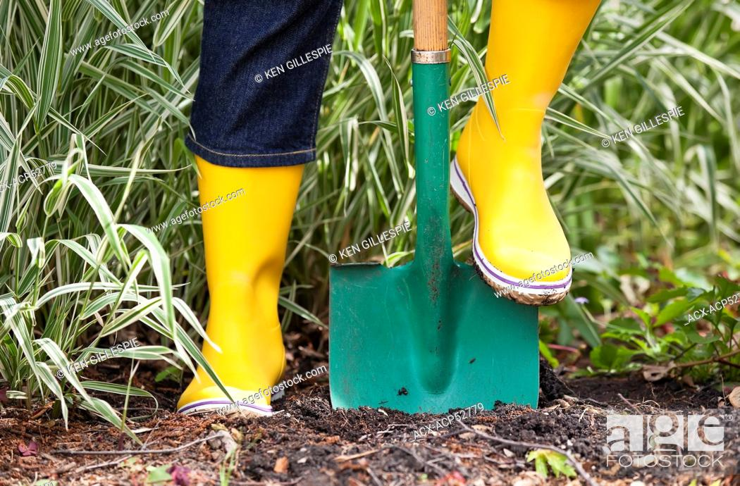 Stock Photo: Woman digging in soil with a garden spade, close up view, Winnipeg, Manitoba, Canada.