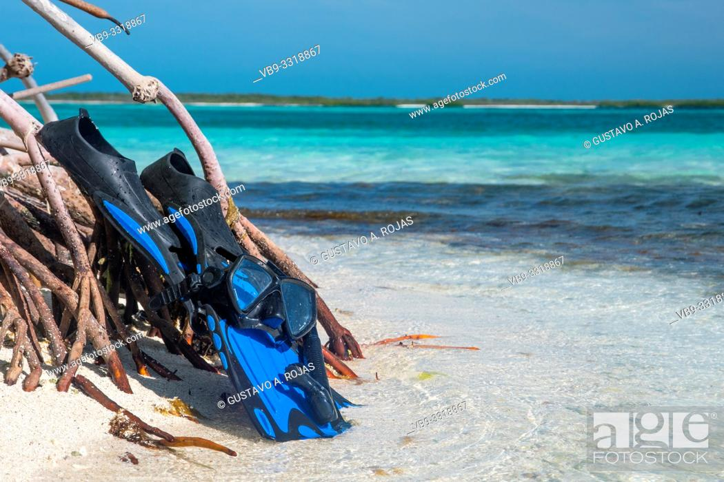 Stock Photo: snorkel equipment on a reef coral - Fins, mask, tube. Equipment for diving - Coral Reefs On the beach.