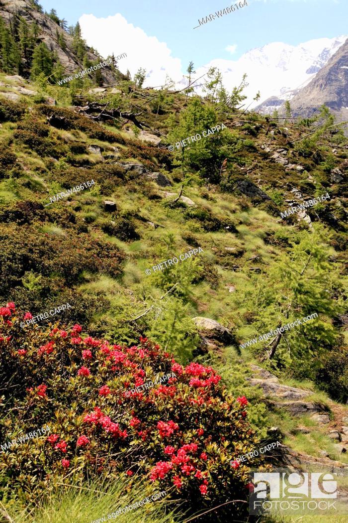 Stock Photo: parco nazionale del gran paradiso, valle d'aosta, italia.