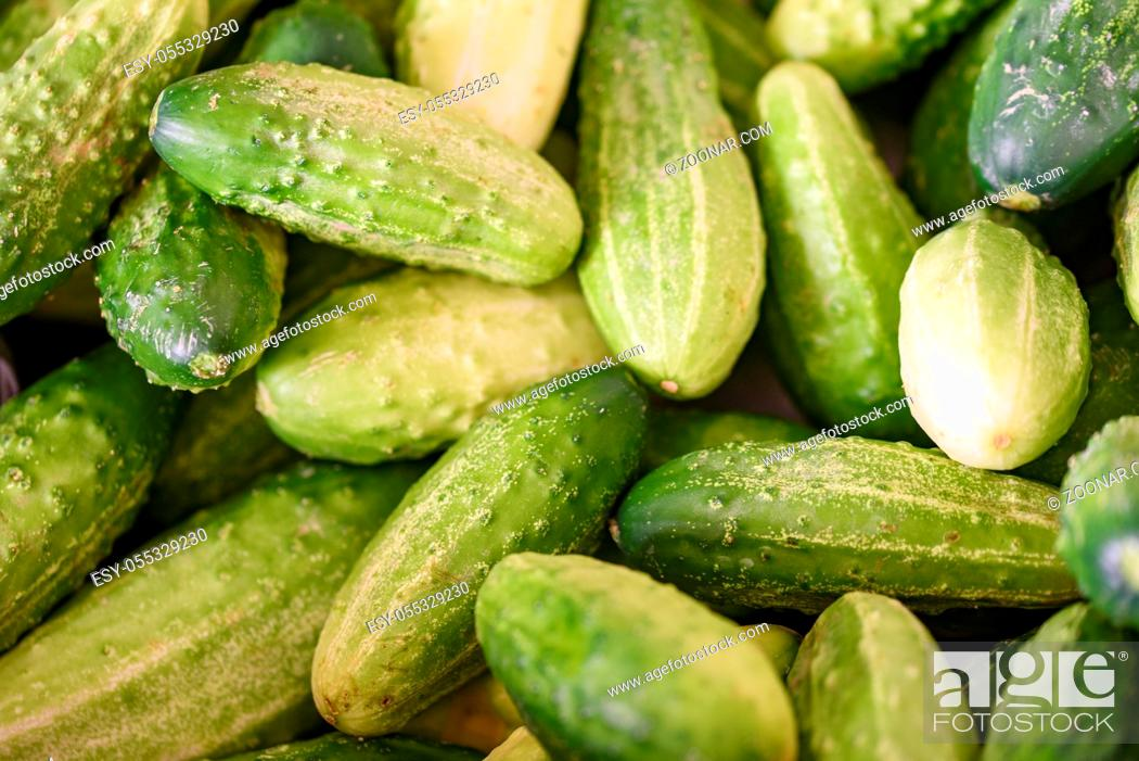 Stock Photo: Cucumber background Cucumber harvest. many cucumbers. cucumbers from the field.