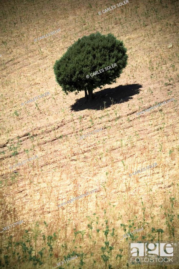 Stock Photo: Lone Tree, Sardinia, Italy.
