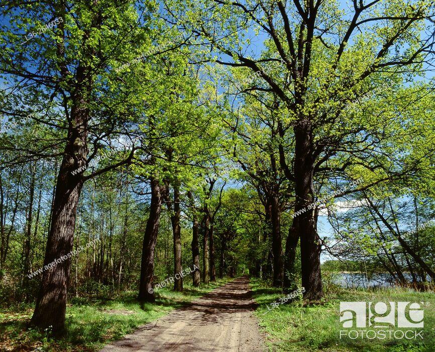 Stock Photo: Landscape Park Stawy Milickie. Poland.
