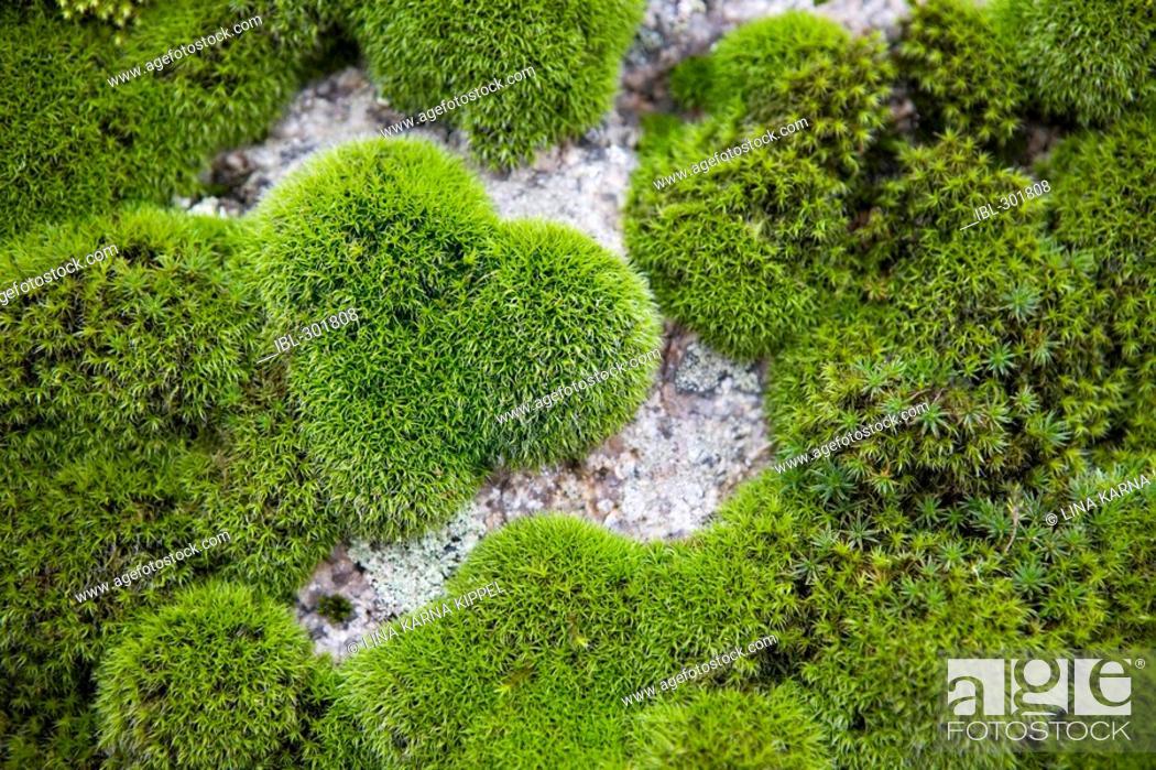 Stock Photo: Moss.