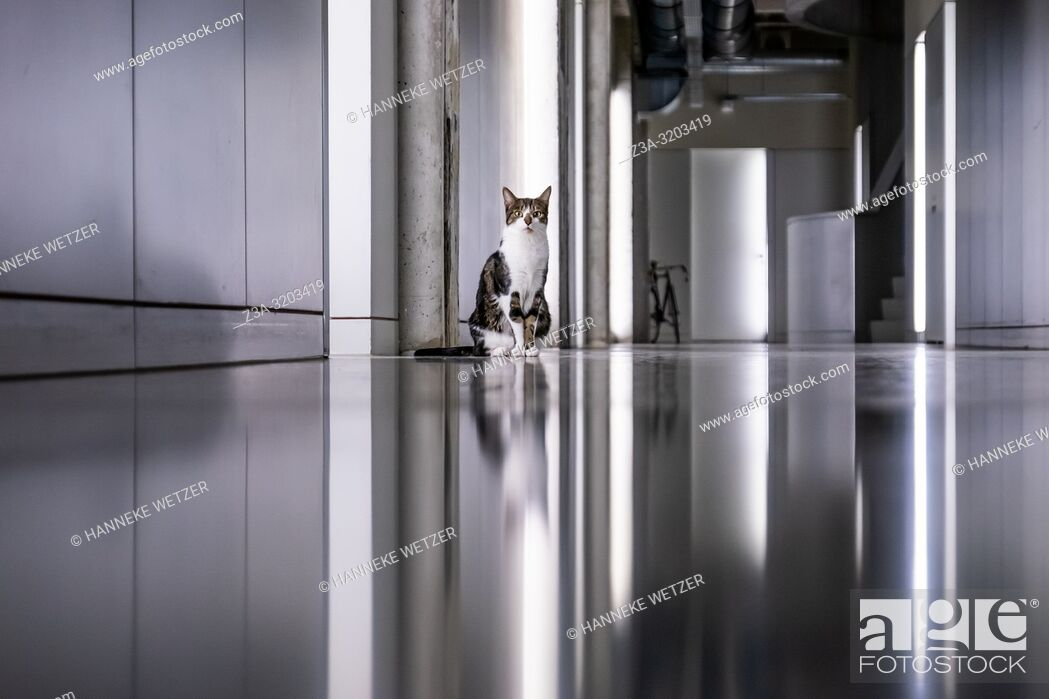 Photo de stock: Cat in the minimalistic interior of former Philips factory building Anton at Strijp-S in Eindhoven, the Netherlands.