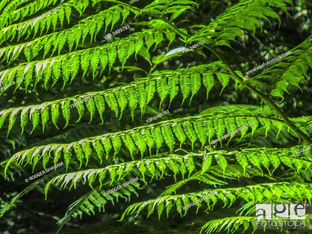 Stock Photo: Forest fern.