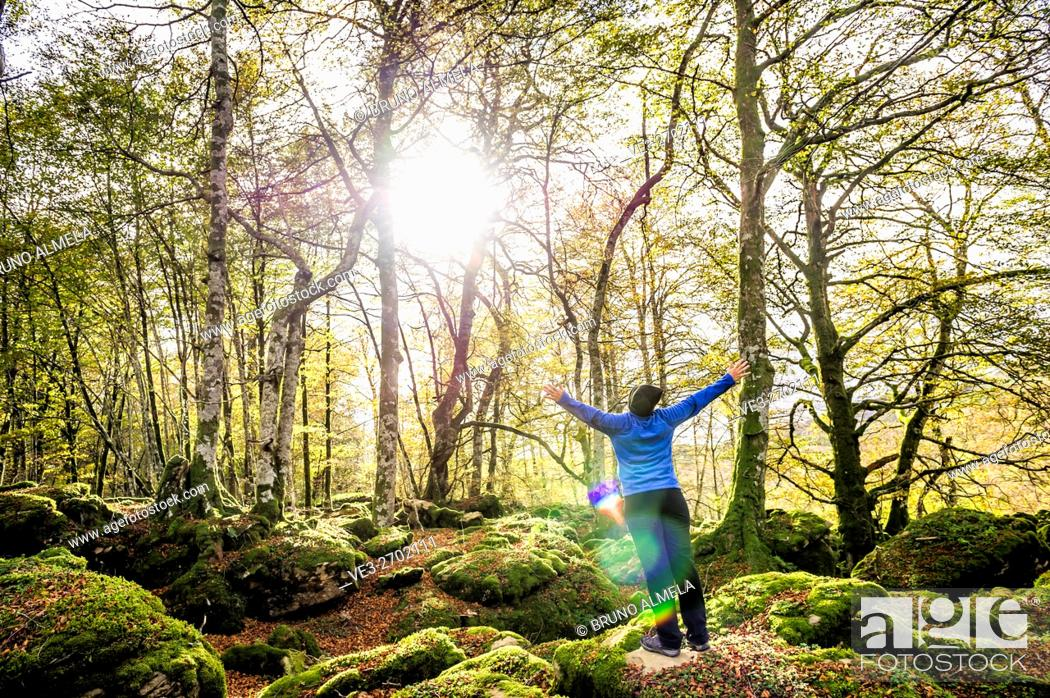 Stock Photo: Magical beech forest between Organbidea mountain pass and Orbaitzeta foundry , Region of Navarra, Spain.