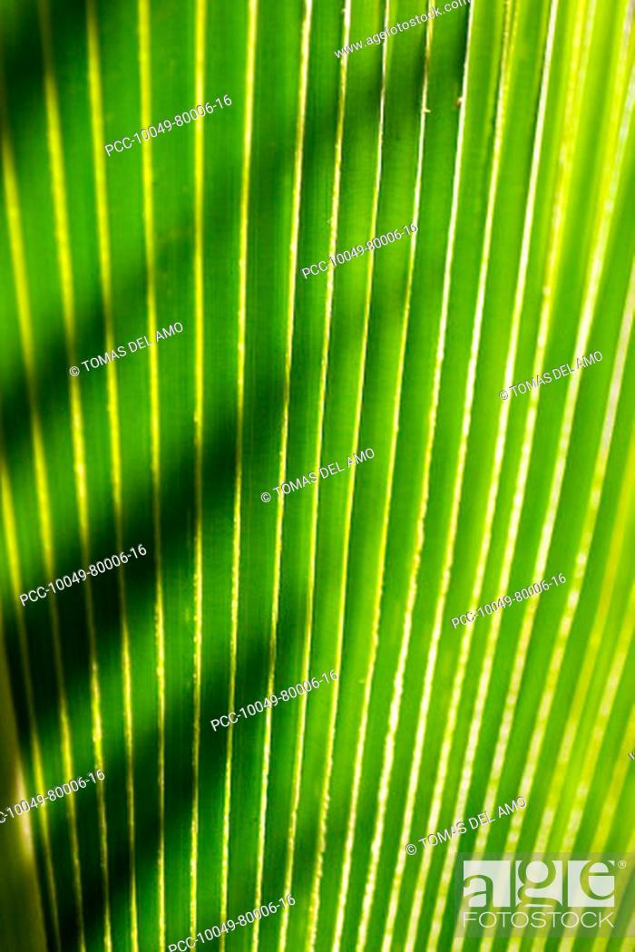 Stock Photo: Close-up of a green leaf, green lines with a sharp shadow thrown across it.