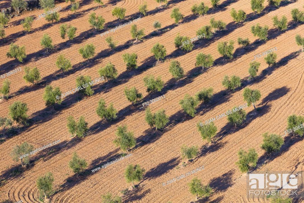 Photo de stock: Dry farming, Torres del Segre territory, Baix Segre, Lleida, Catalonia, Spain, Europe.