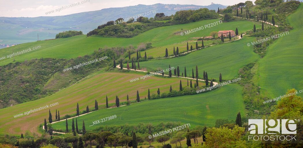 Stock Photo: Curve road with cypress trees in val D'Orcia, Italy.