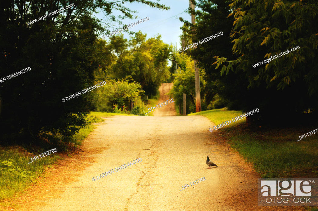 Stock Photo: Road.