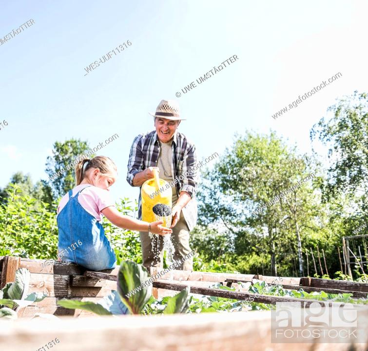 Stock Photo: Grandfather and granddaughter in the garden watering plants.