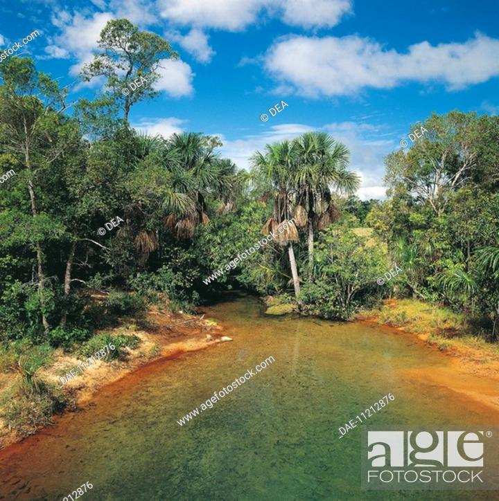 Stock Photo: High angle view of a pond surrounded by trees, Puerto Ayacucho, Amazonas, Venezuela.