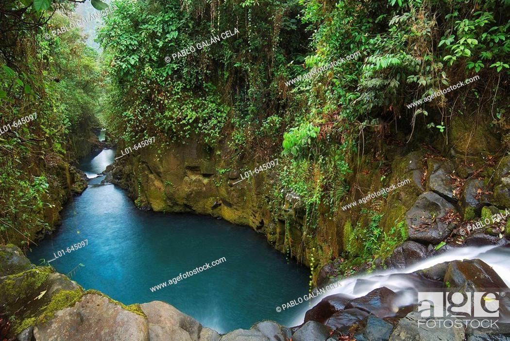 Stock Photo: Equatorial forest. Bioko island. Equatorial Guinea.