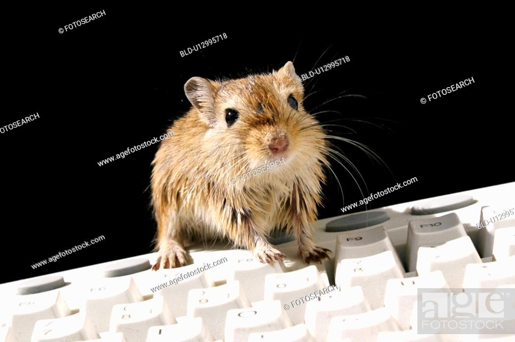 Stock Photo: rechner, geschaeft, alfred, animals, arbeitstier.