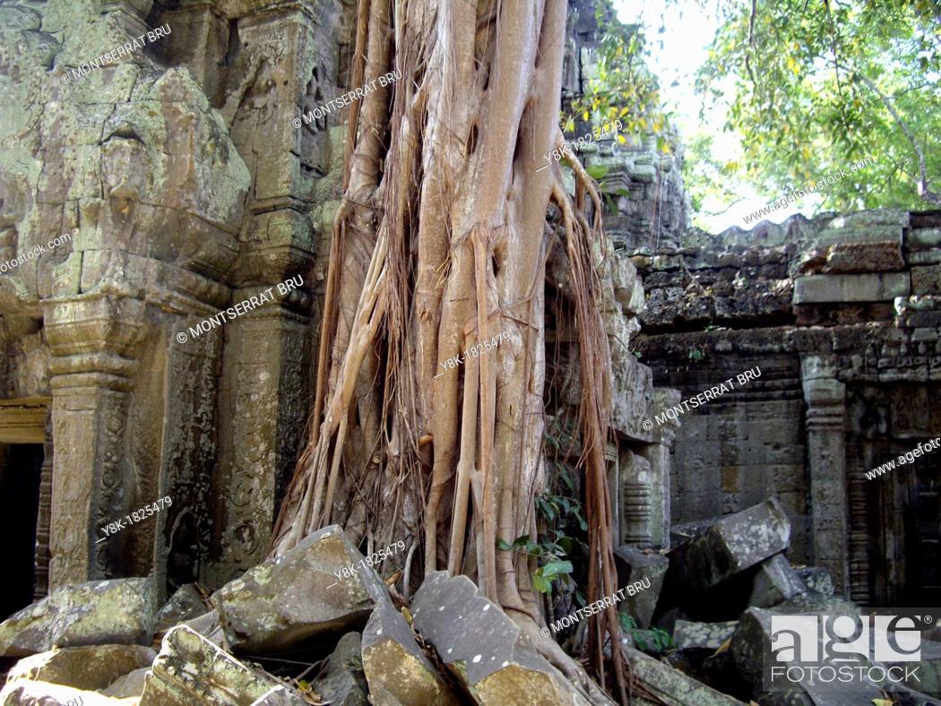 Stock Photo: Massive rootsystem invading the walls at Angkor Ta Prohm Temple, Cambodia.