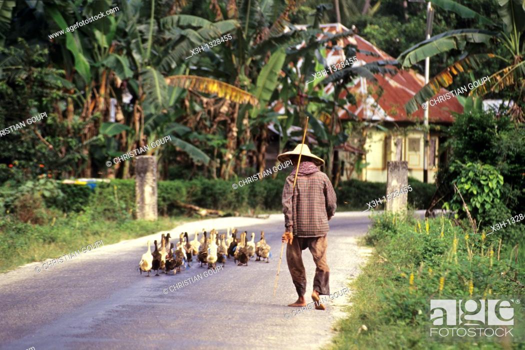 Stock Photo: goose keeper, Sumatra island, Republic of Indonesia, Southeast Asia and Oceania.
