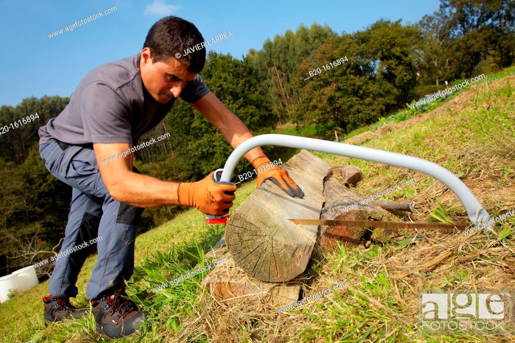 Stock Photo: Farmer chopping wood with hacksaw, Bow saw, Agricultural and gardening hand tool, Usurbil, Gipuzkoa, Basque Country, Spain.
