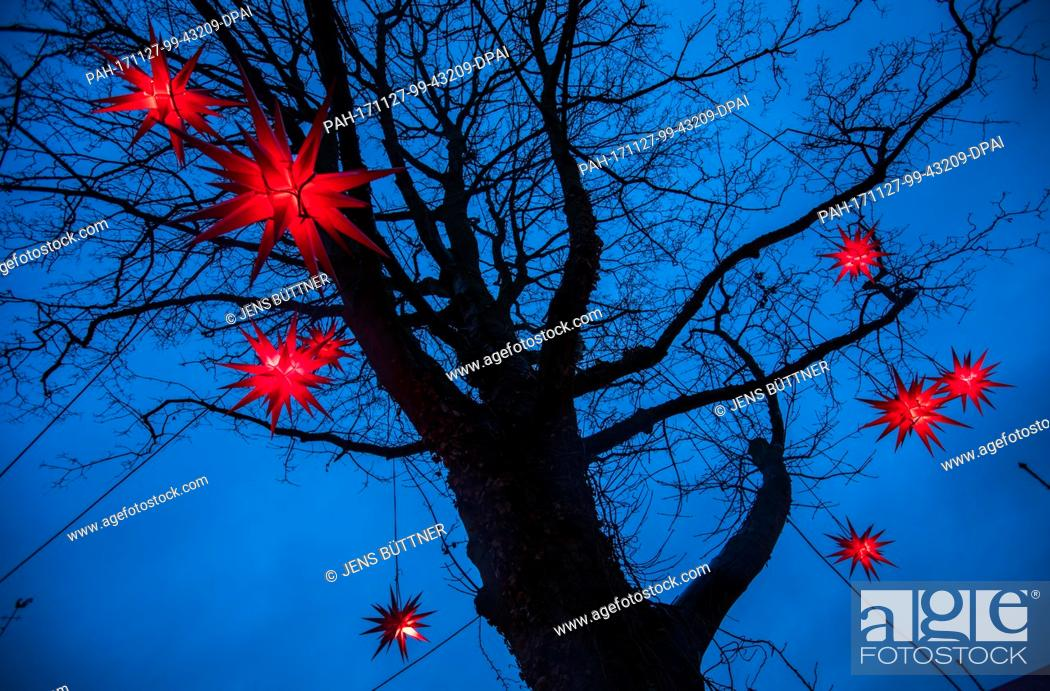 Stock Photo: Red Christmas stars hang in a tree of the fairy tale forest after the opening of the children's Christmas market in Luebeck, Germany, 27 November 2017.