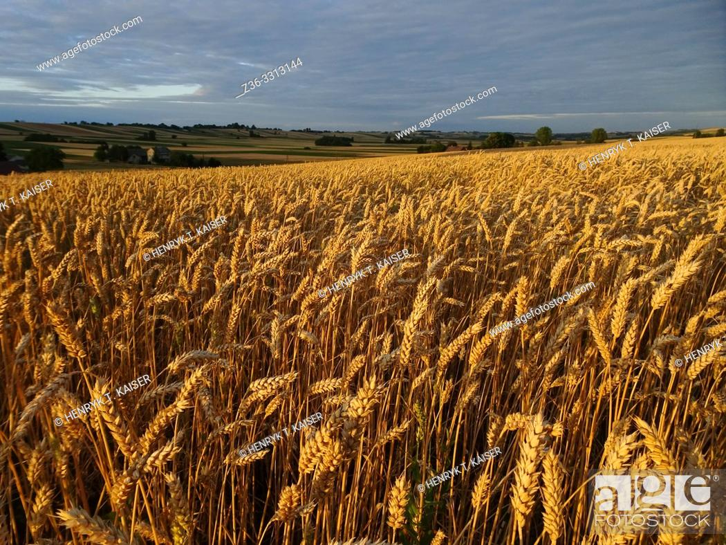 Stock Photo: Agriculture in Lasser Poland near Slomniki.