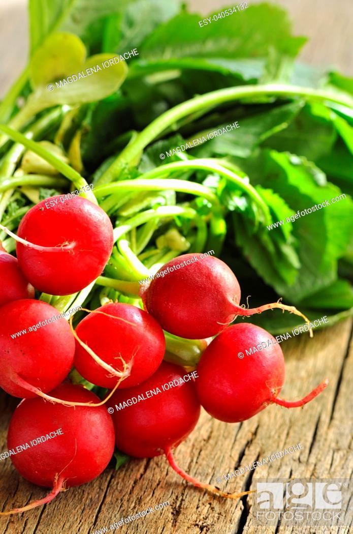 Stock Photo: Bundle of fresh organic radishes with leaves.
