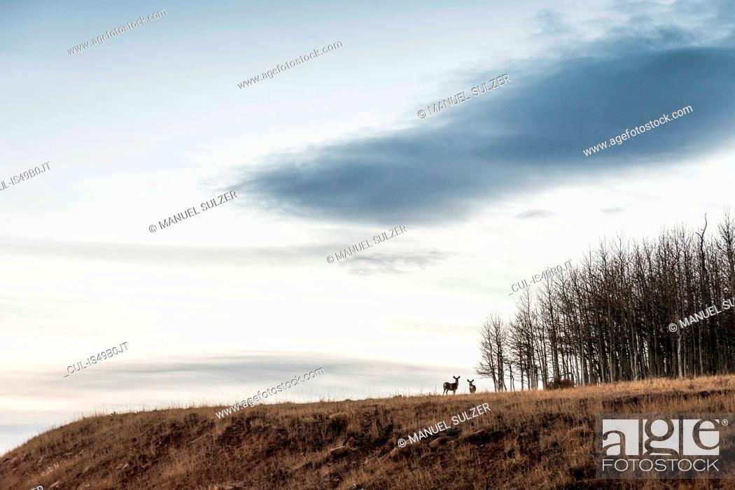 Stock Photo: Scenic view with deer on hillside, Fruita, Utah, USA.