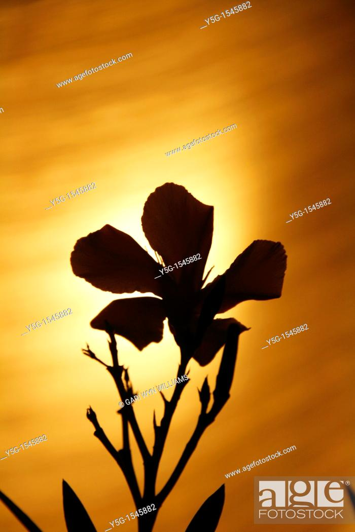Stock Photo: detail silhouette plant at night.