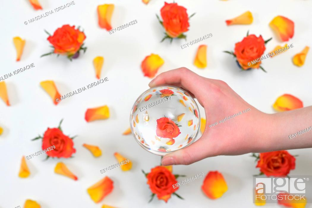 Stock Photo: A Glass Round Lens ball and Roses reflexion in studio.